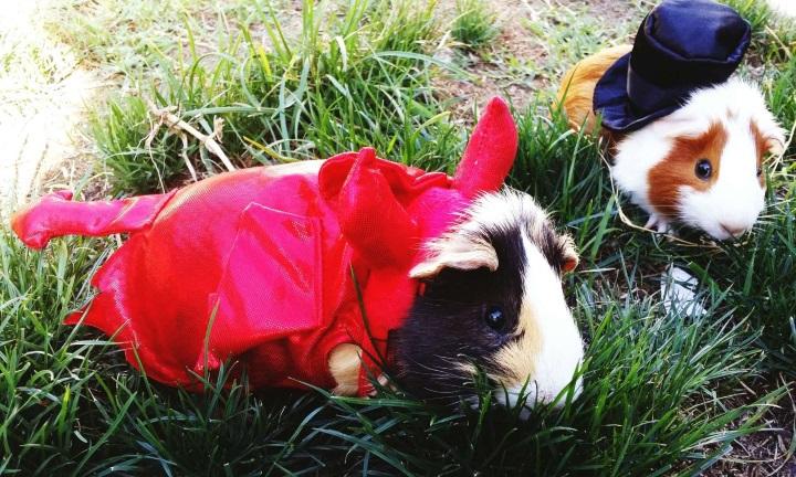 Модники и модницы из мира животных, 40 фото
