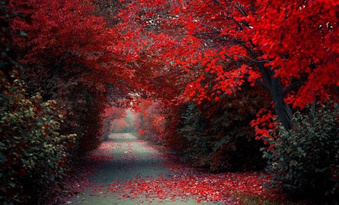 20 фотографий, на которых осень особенно прекрасна