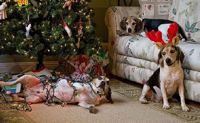 Собаки, которых оставили дома одних, 30 веселых фотографий