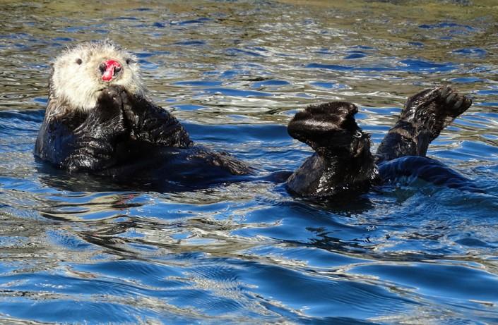 Малоизвестные и необычные факты о животных