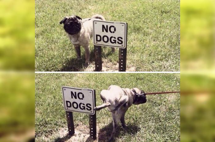 50 веселых животных, которым нет дела до правил