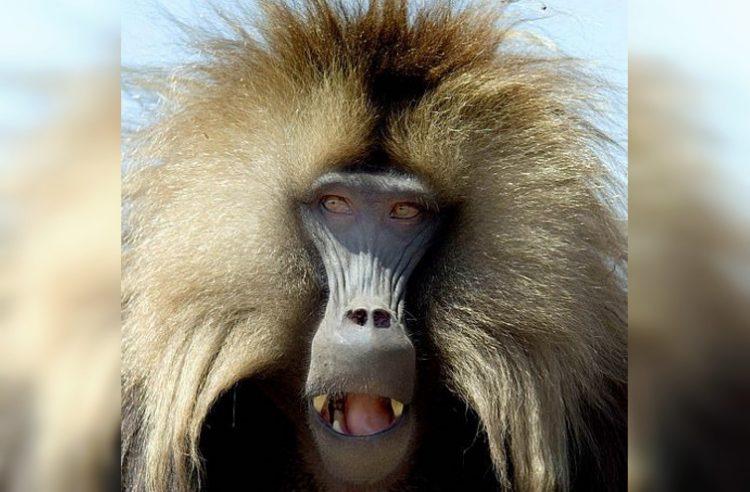 Животные с очень смешными прическами, 30 фото