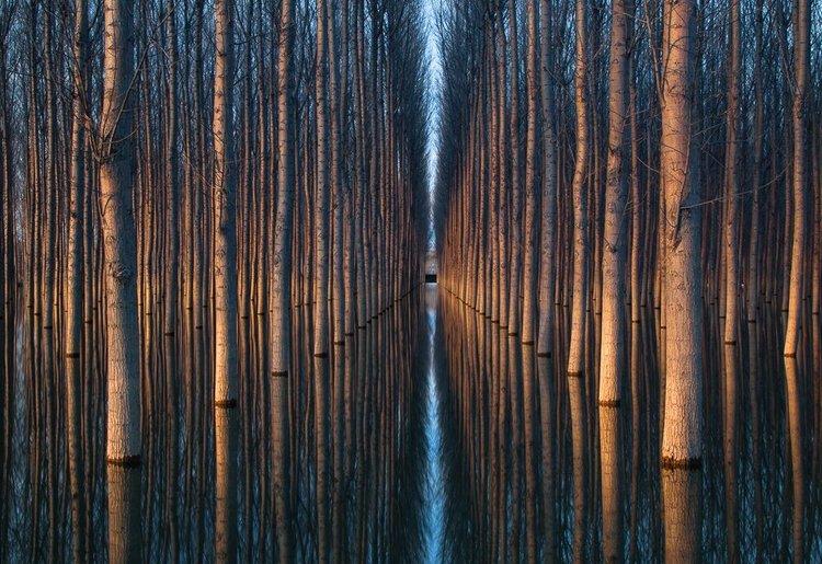 Удивительные геометрические формы, созданные природой