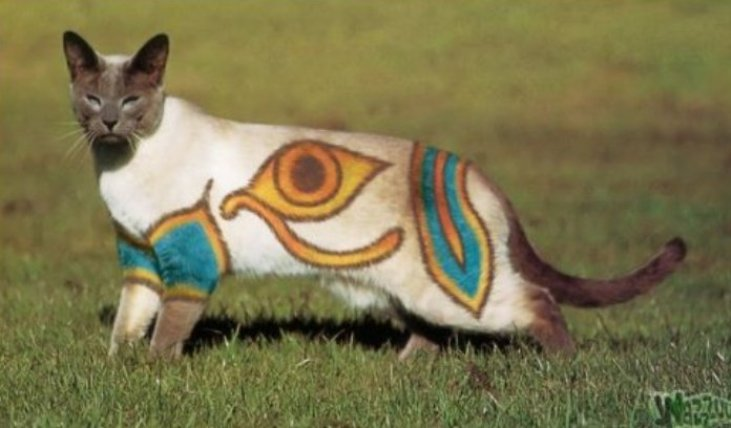 Необычные стрижки котов и собак, 30 фото