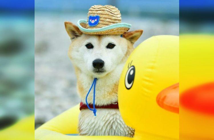 Животные, которые провели это лето гораздо круче вас
