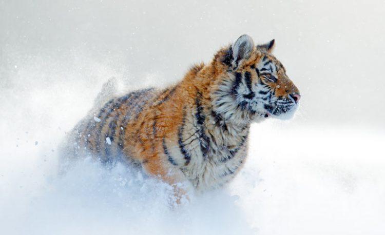 Животные, занесённые в Красную Книгу России: 40 фото