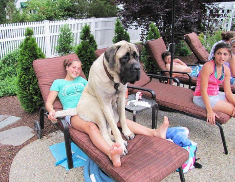 40 собак, которые не понимают, какими они стали большими