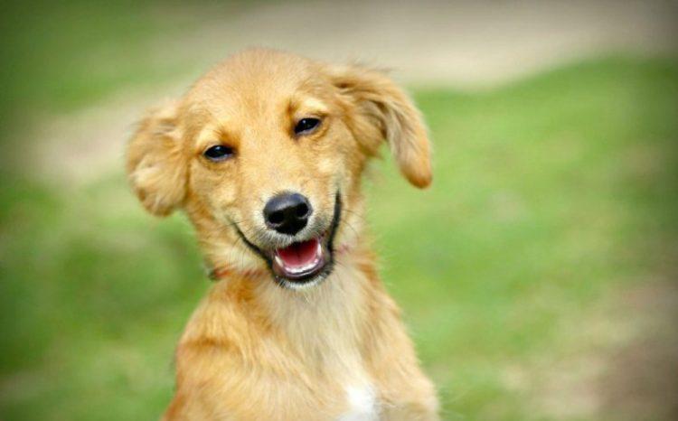 30 улыбчивых животных, которые поднимут вам настроение