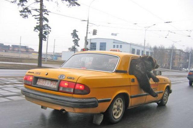 Курьезные случаи с такси, которые могут стать сюжетом для анекдотов