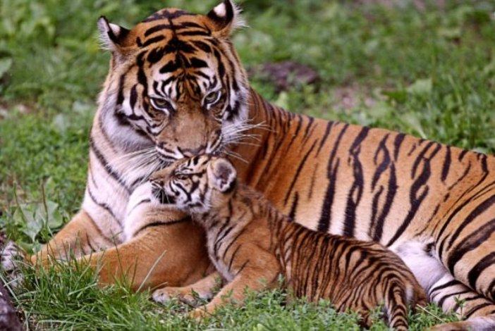 35 милых фотографий животных со своим потомством